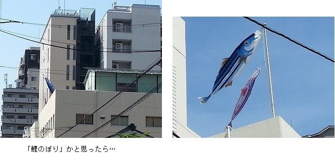 160511_tanshin1.jpg