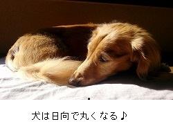 141105_tansin.jpg
